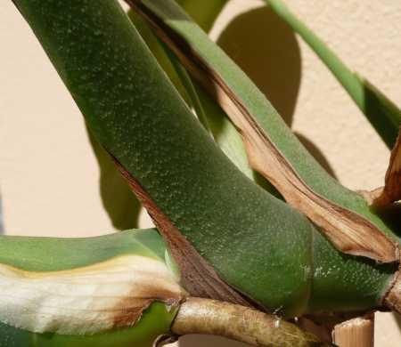 Detail řapíku listu