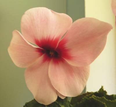 Rozvíjející se květ
